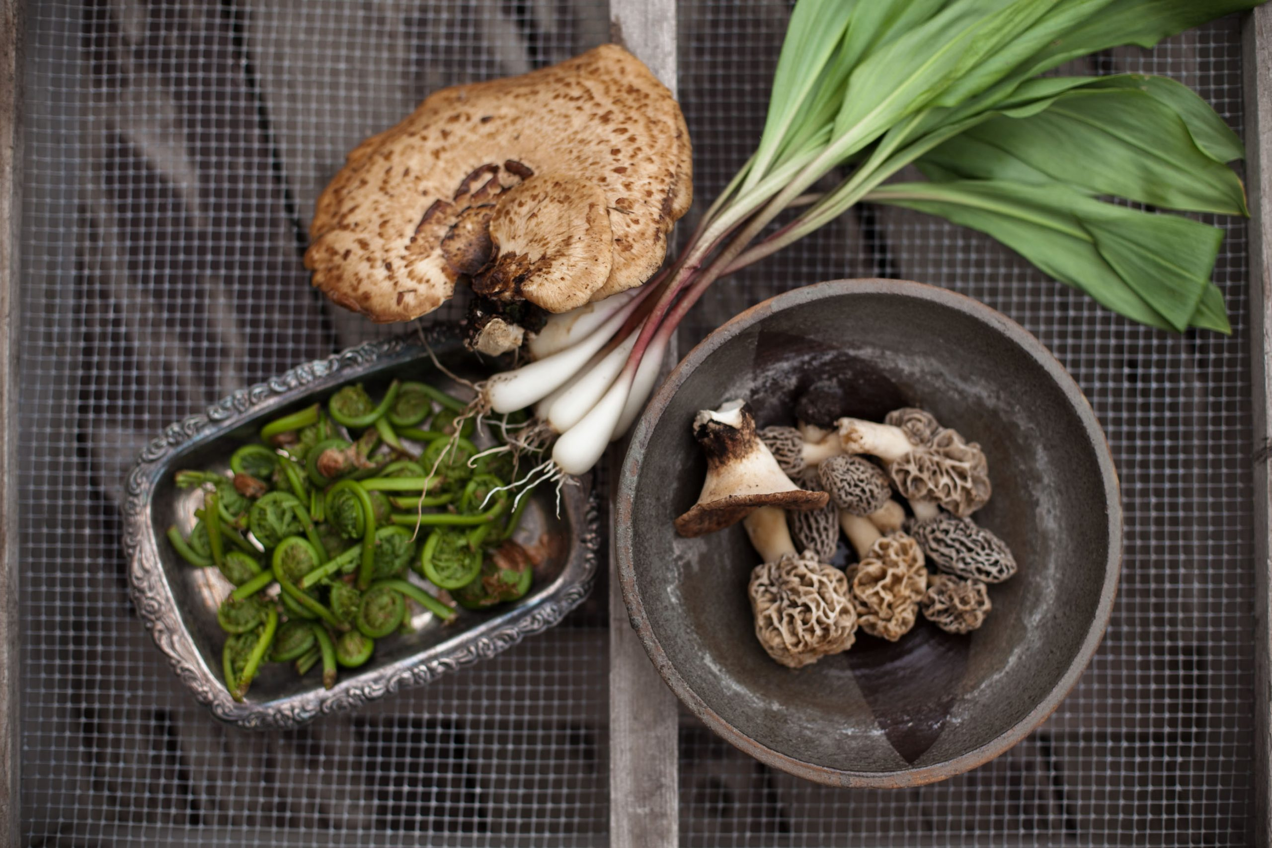the seed guild, mushrooms, fiddleheads, morels, ramps, wisconsin, wisconsin foraging